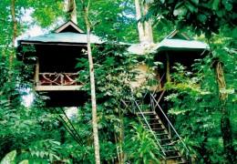 Khao Sok Baumhaus Tour mit Übernachtung von Khao Lak