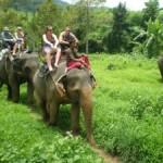 Mit der Familei auf dem Rücken eines Elefanten.