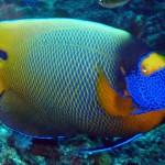 Guter Fischbestand und gute Wasserqualität bei den Surin Inseln.